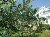 Дома, хозяйства,  Нижегородская область Нижний Новгород, цена 15 800 000 рублей, Фото