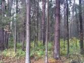 Земля и участки,  Московская область Нахабино, цена 9 000 000 рублей, Фото