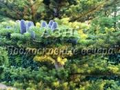 Дачи и огороды,  Московская область Новорижское ш., цена 19 800 000 рублей, Фото