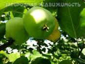 Дома, хозяйства,  Еврейская AO Другое, цена 1 300 000 рублей, Фото