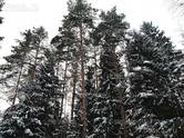 Дома, хозяйства,  Московская область Наро-Фоминский район, цена 49 800 000 рублей, Фото