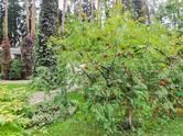 Дома, хозяйства,  Московская область Одинцовский район, цена 125 097 960 рублей, Фото