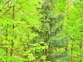 Дома, хозяйства,  Московская область Одинцовский район, цена 542 879 255 рублей, Фото