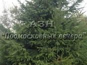 Дачи и огороды,  Московская область Носовихинское ш., цена 2 000 000 рублей, Фото