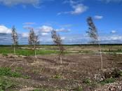 Земля и участки,  Ленинградская область Тосненский район, цена 500 000 рублей, Фото