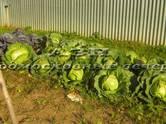 Дачи и огороды,  Московская область Пушкино, цена 10 000 000 рублей, Фото