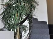 Квартиры,  Новосибирская область Бердск, цена 9 700 000 рублей, Фото