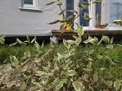 Дома, хозяйства,  Ленинградская область Гатчинский район, цена 2 800 000 рублей, Фото