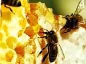 Продовольствие Мёд, Фото