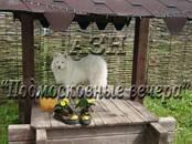 Дачи и огороды,  Московская область Каширское ш., цена 4 700 000 рублей, Фото
