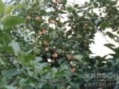 Дома, хозяйства,  Новосибирская область Мошково, цена 1 800 000 рублей, Фото