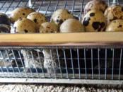 Продовольствие Яйца, цена 3 рублей, Фото