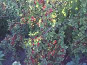 Земля и участки,  Красноярский край Красноярск, цена 900 000 рублей, Фото