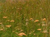 Земля и участки,  Краснодарский край Краснодар, цена 1 259 000 рублей, Фото