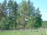 Земля и участки,  Псковская область Бежаницы, цена 600 000 рублей, Фото