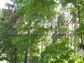 Земля и участки,  Московская область Новорижское ш., цена 364 767 000 рублей, Фото