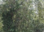 Квартиры,  Краснодарский край Сочи, цена 2 800 000 рублей, Фото