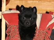 Собаки, щенки Неизвестная порода, цена 40 000 рублей, Фото
