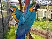 Попугаи и птицы Попугаи, цена 8 000 рублей, Фото