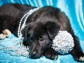 Собаки, щенки Неизвестная порода, цена 10 рублей, Фото
