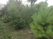 Дома, хозяйства,  Краснодарский край Сочи, цена 4 950 000 рублей, Фото