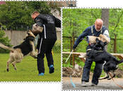 Собаки, щенки Восточно-Европейская овчарка, цена 20 000 рублей, Фото