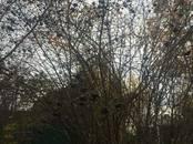 Земля и участки,  Санкт-Петербург Другое, цена 2 200 000 рублей, Фото