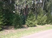 Домашние растения Плодовые деревья, саженцы, цена 10 000 рублей, Фото