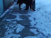 Собаки, щенки Неизвестная порода, цена 1 рублей, Фото