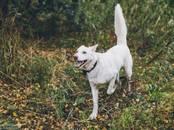 Собаки, щенки Неизвестная порода, цена 100 рублей, Фото
