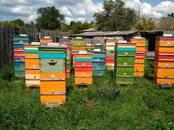 Продовольствие Мёд, цена 500 рублей/шт., Фото