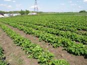 Сельское хозяйство Семена и рассада, цена 15 рублей, Фото