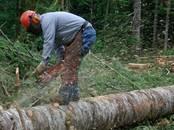 Хозяйственные работы Вырубка леса, Фото