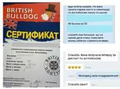 Курсы, образование,  Языковые курсы Английский, цена 400 рублей, Фото