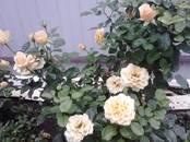 Дачи и огороды,  Краснодарский край Краснодар, цена 4 500 000 рублей, Фото
