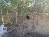 Животноводство,  Сельхоз животные Свиньи, цена 15 000 рублей, Фото