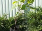 Домашние растения Садовые растения, цена 100 рублей, Фото