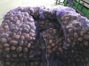 Продовольствие,  Овощи Картофель, цена 12 рублей/кг., Фото