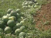 Продовольствие Ягоды, цена 10 рублей/кг., Фото