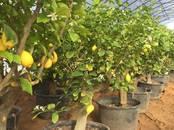 Домашние растения Крупные растения, цена 200 000 рублей, Фото