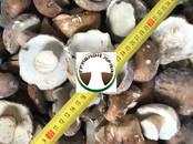Продовольствие Грибы, цена 550 рублей/кг., Фото