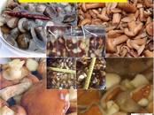 Продовольствие Грибы, цена 500 рублей/кг., Фото