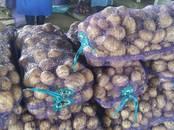 Продовольствие,  Овощи Картофель, цена 11 рублей/кг., Фото