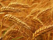 Продовольствие Зерно и мука, Фото