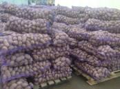 Продовольствие,  Овощи Картофель, цена 8.50 рублей/кг., Фото