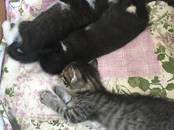 Кошки, котята Беспородная, цена 0.01 рублей, Фото
