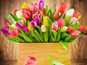 Домашние растения Садовые растения, цена 24 рублей, Фото