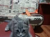 Кошки, котята Беспородная, цена 100 рублей, Фото