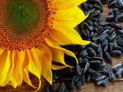 Сельское хозяйство Семена и рассада, цена 6 500 рублей, Фото