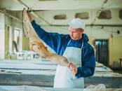Рыбное хозяйство Рыба живая, мальки, цена 80 рублей, Фото